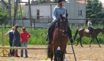 Sprzęt dla konia