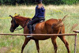 Sprzęt do jazdy konnej